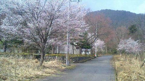 090325imazu.jpg