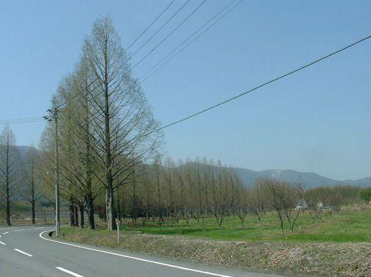 030417namiki02.jpg