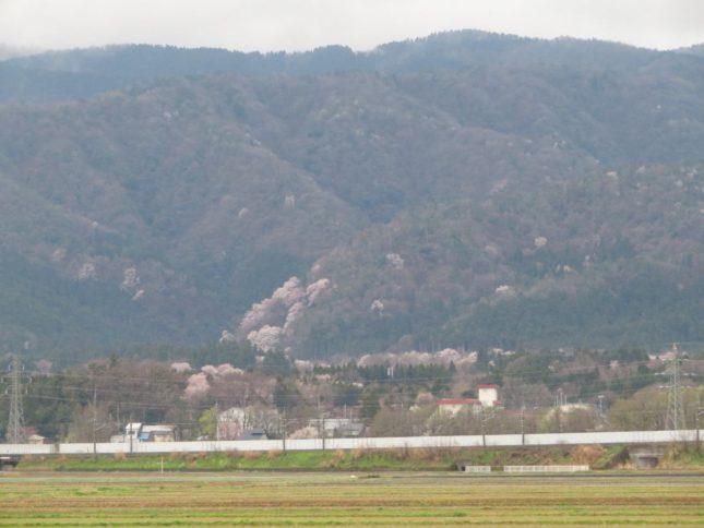 200402sakura