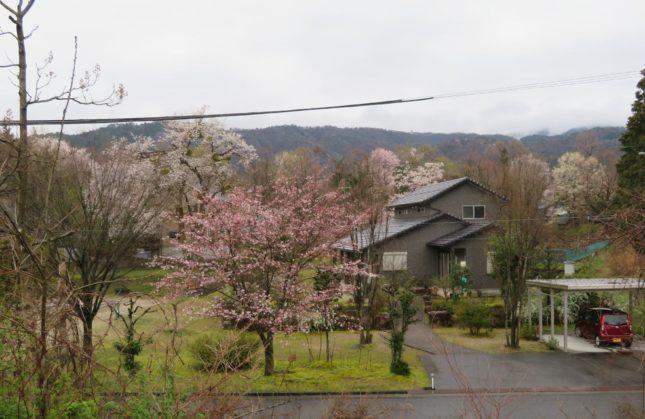200403sakura